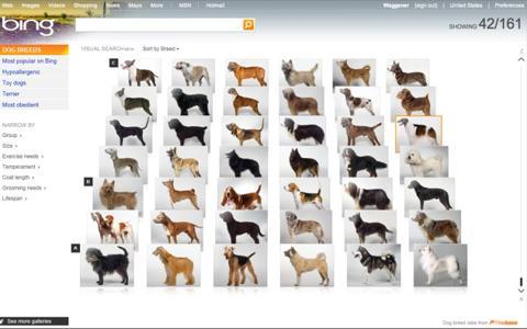 bing_dog_breeds_thumb1.jpg