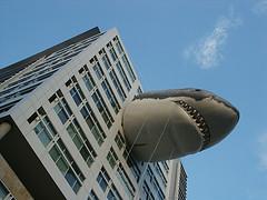 Sharkweek2.jpg